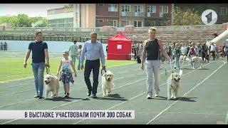 30 пород, 4 страны: выставка собак в Тирасполе