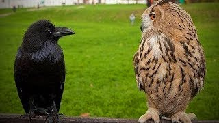 Awesome Birds 😂🦜 Funny and Awesome Birds (Full) [Funny Pets]