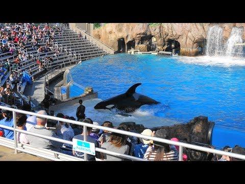 One Ocean Full Show SeaWorld San Diego