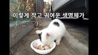 (하얀 귀여움 주의) 카메라에 또 찍힌 한달된 애기 길고양이(*≧ω≦*)