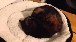 Waking a deaf cat in deep sleep