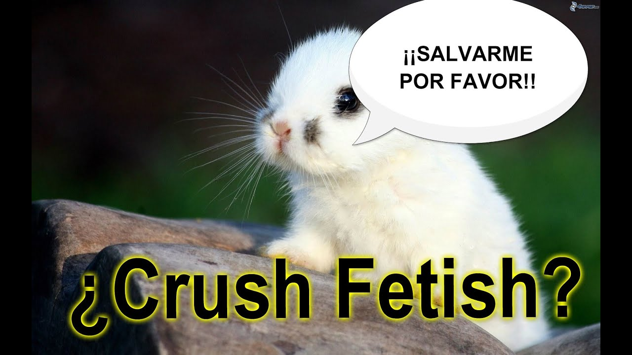 Animal Crush Animal Crush Fetish Matando Animales