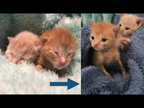Rescue Two Tiny Kitten Only 1 Day Old Because Their Mom Passed Away After Gave Birth