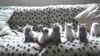 Прикол с кошками, котята танцуют