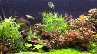 Aquarium 360 l