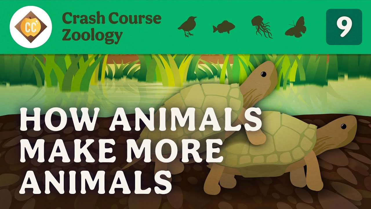 Reproduction: Crash Course Zoology #9