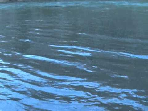 Trask steelhead january 10 youtube for Trask river fishing report