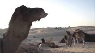 Sahara au lever du jour   by Eze