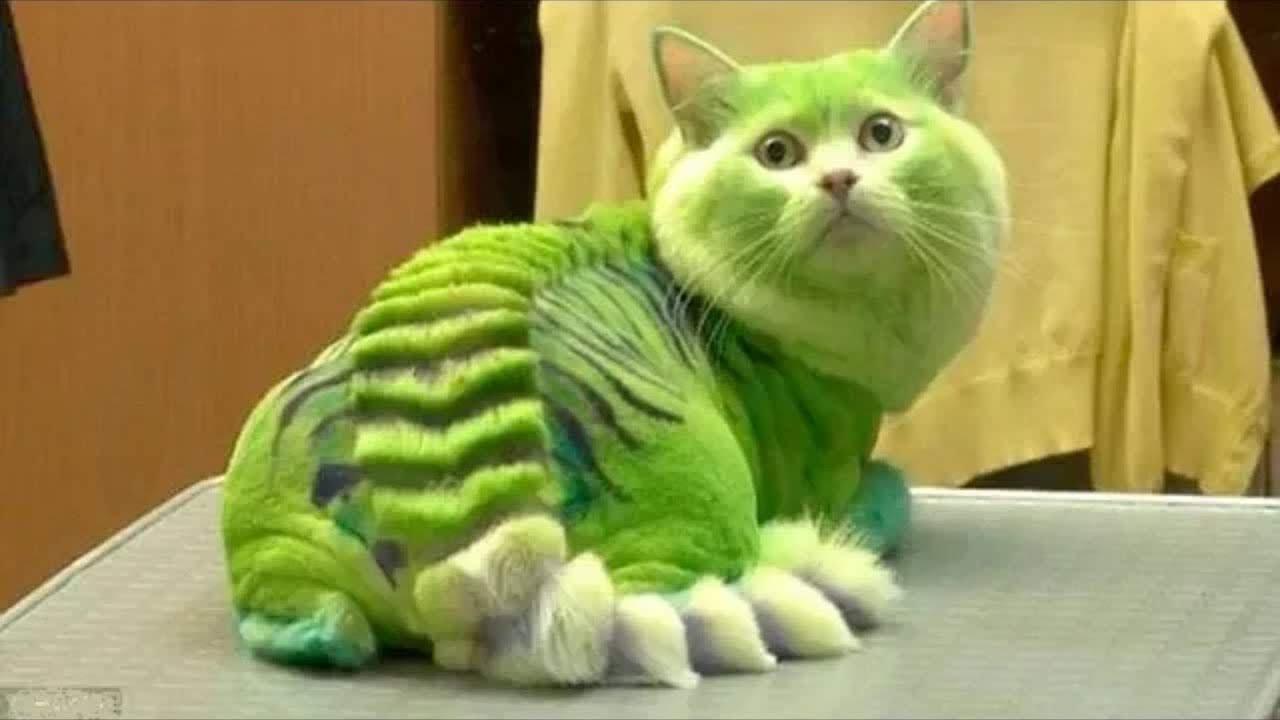pisici - pisici amuzante mori de ras
