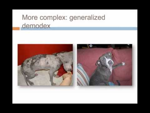 How Shelter Medicine is Helping Create a No Kill Nation - Full video