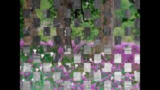 Những Tâm Hồn Cô Đơn - Thái Châu - Bằng Kiều