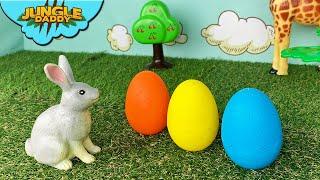 Rabbit Egg Surprise!!
