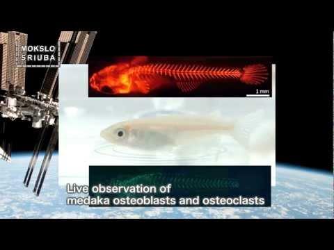 Mokslo sriuba: apie Tarptautinę kosminę stotį (2 dalis)