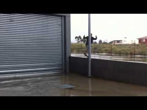 Liam McMahon's skating edit