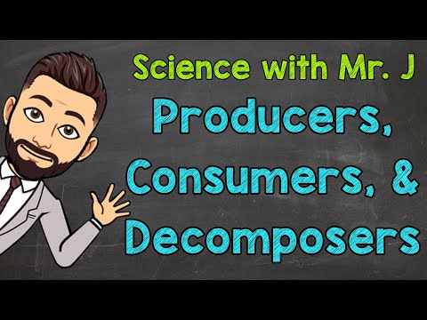 Producers, Consumers, and Decomposers | Ecosystems