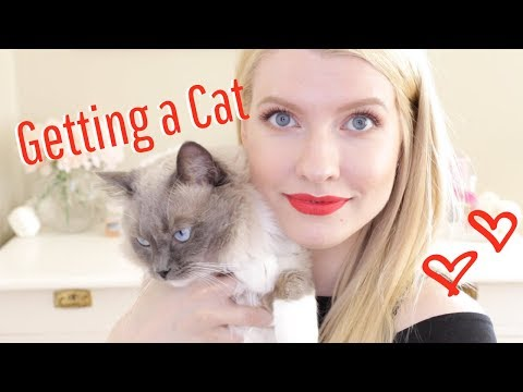 WHAT TO CONSIDER BEFORE GETTING A CAT - Meet My Ragdoll Louie