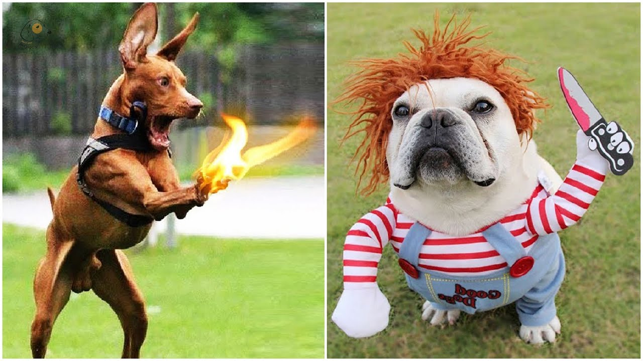 Angry Dogs    The Best Videos About Dogs #23