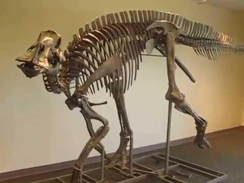 Maiasaura peeblesorum- Cory