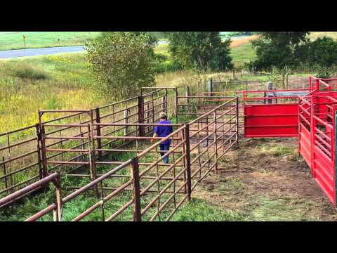 Cattle  Pens/alley /chute
