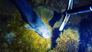 подводная охота январь 2021 ночь