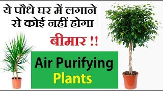 Air purifying plants ये पौधे घर मे लगाने से बीमार नही होंगे आप ।