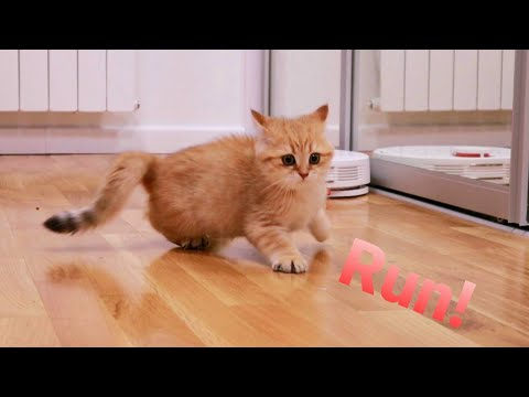 Kittens' reaction to a robot vacuum cleaner 🙀 Funny