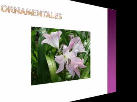 Las plantas youtube for Funcion de las plantas ornamentales