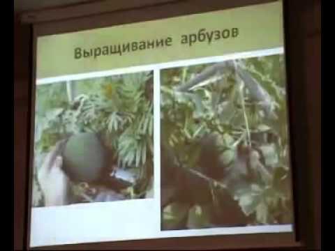 Выращивание ОГУРЦОВ, ТЫКВЫ, ДЫНИ и АРБУЗОВ