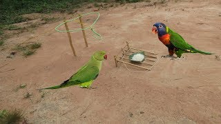 Creative Technology Unipue Bird Trap Using Traditional Trap
