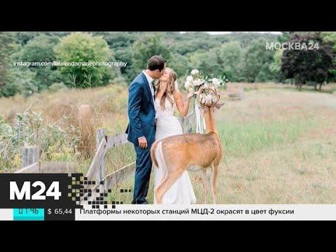 Смотреть фото Актуальные новости мира за 11 сентября - Москва 24 новости россия москва