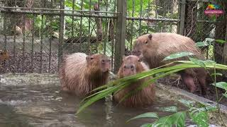 臺北市立動物園透過「臺灣動物園暨水族館協會(Taiwan Aquarium and Zoo...