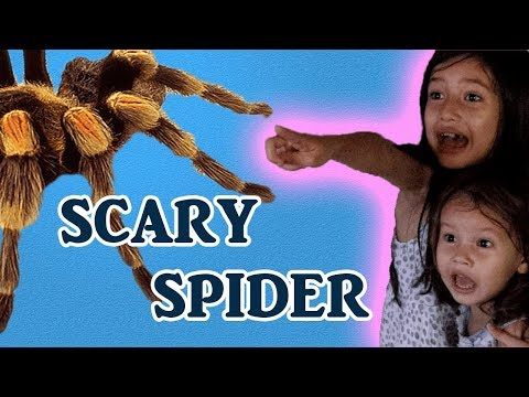 SPIDER IN THE BEDROOM!!🕷🕸 (lets go to the beach)