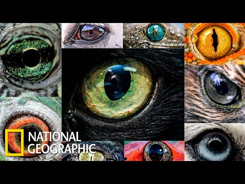 Мир глазами животных | Документальный фильм про животных | (National Geographic)