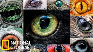 Мир глазами животных | Документальный фильм про животных | (National Geographic)