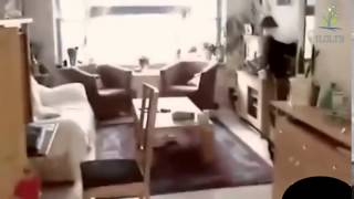 Видео про кошек  Кошки приколы  Забавные кошки
