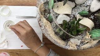 cómo eliminar cochinilla de las plantas