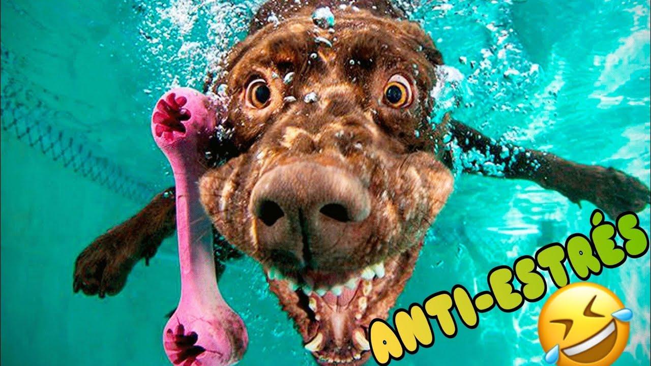 🤠 Animales Graciosos para Desestresarte 😻🐶 Mejora tu Día con Animales Chistosos