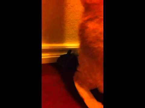 Bunny Killer Cat