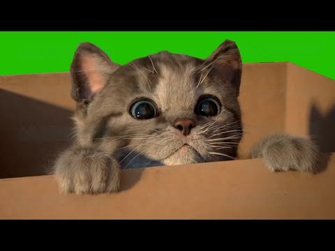 Little Kitten My Favorite Cat Play Fun Pet Care Game for Toddlers and Children