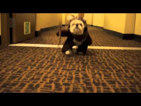 Ewok Dog Running for Treat (Bribing the Ewok)