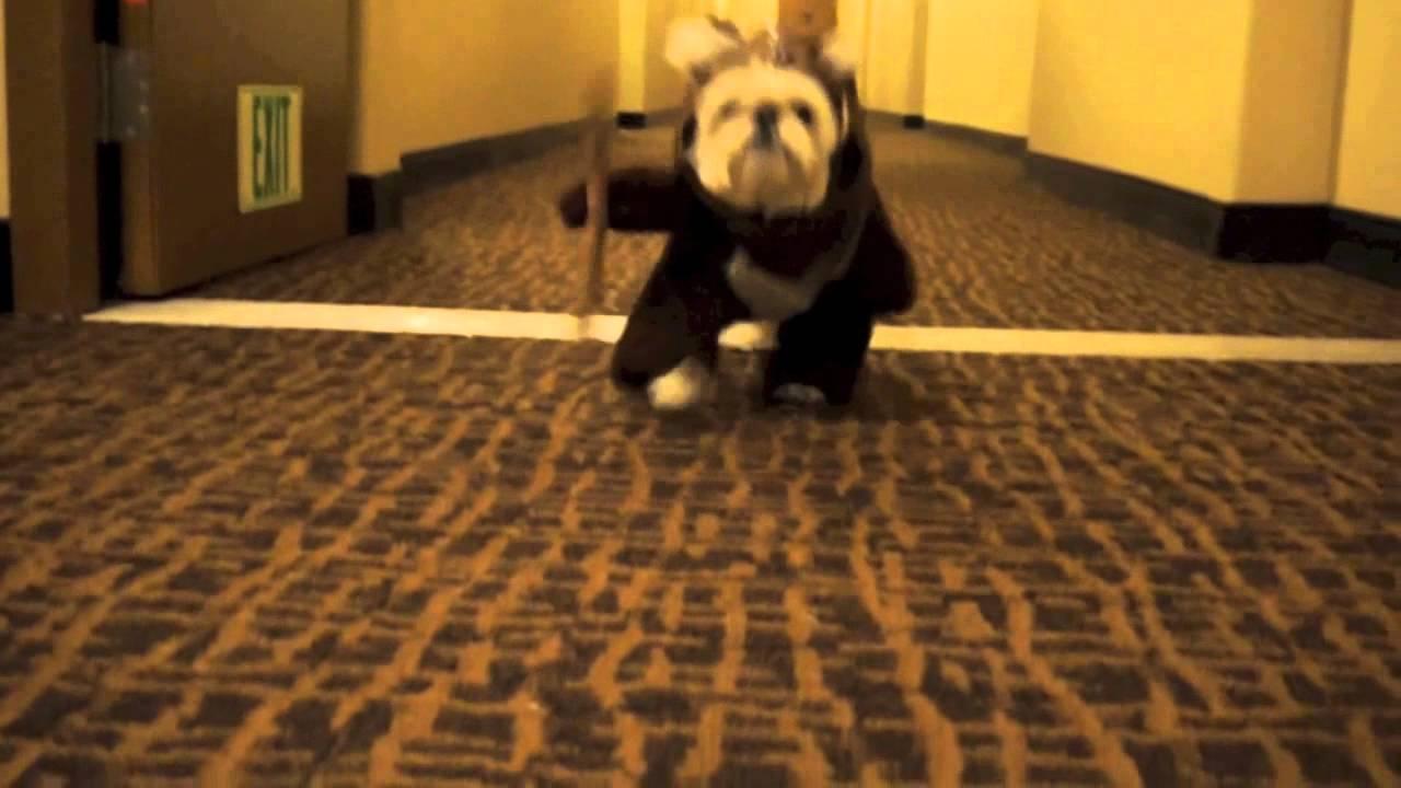 How To Make Ewok Dog Costume