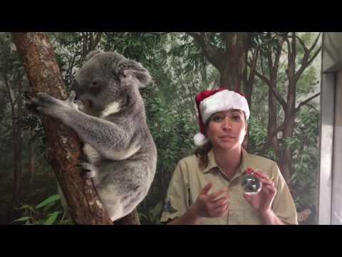 Zoo Miami Christmas Ornaments