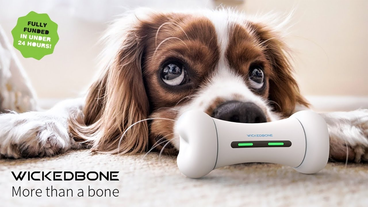 Wickedbone A Remote Control Dog Toy More Crowdfunding Success