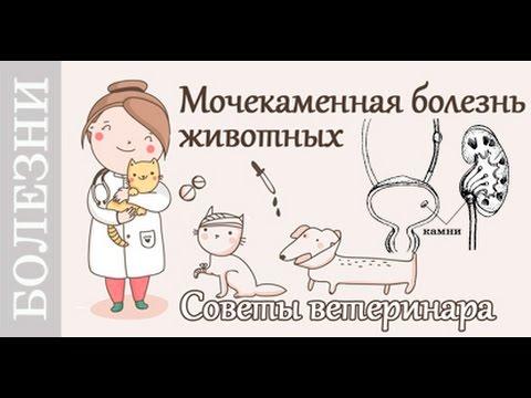 Мочекаменная болезнь у котов, собак. Советы ветеринара