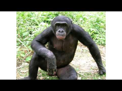 обезьяна -