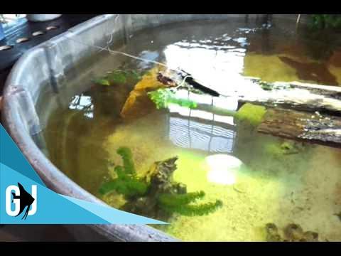 15 How To 300 Gallon Rubbermaid Stocktank Turtles Setup