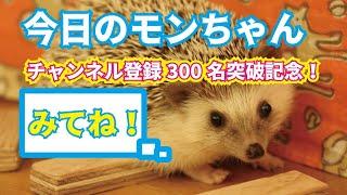 【今日のモンちゃん】 チャンネル登録300名越え記念! #おうちGW