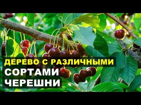 Каталог сортов Плодовый сад