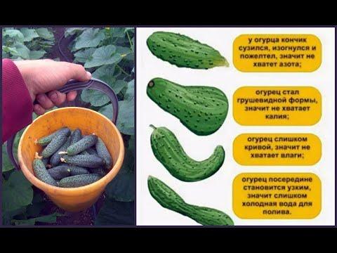 Вопрос: Какие могут быть причины деформации плодов огурцов?