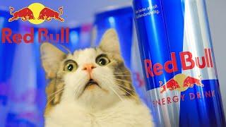 Este Red Bull Daunator?
